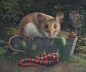 """ADW"", (Animal Diversity Web) Acrylic on board."