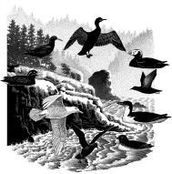 Cape Blanco birds