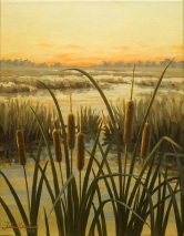 Evening cattails