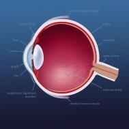 eye_fullsize