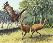 Haasts Eagle, Gouache on illustration board