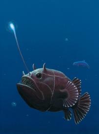 Lantern Fish, Acrylic