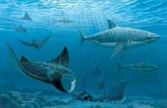 """Rays & Sharks, Illustration for """"W is for Waves"""""""