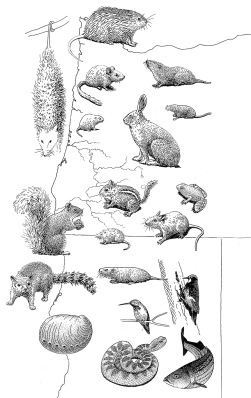 pacific-coast-animals