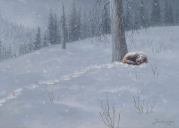 Recovering wolverine. Acrylic on board.