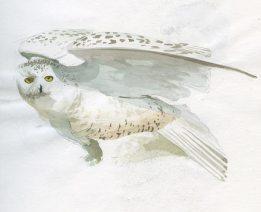 snowyOwl_fullsize