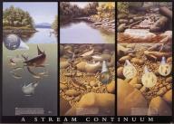 A Stream Continuum