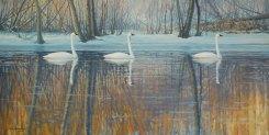 swans1_fullsize