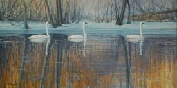 swans_Megahan