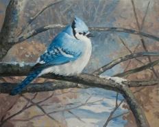 Winter Bluejay