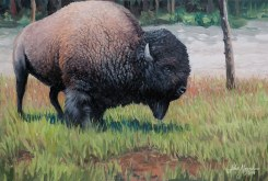 Yellowstone Buffalo