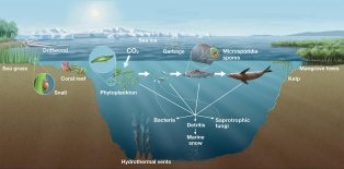 A review of marine fungi.