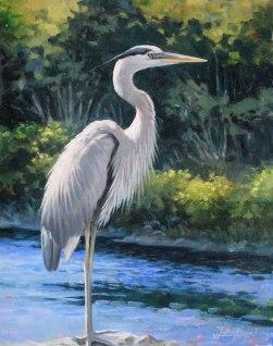 Great Blue Heron on Northwest River.